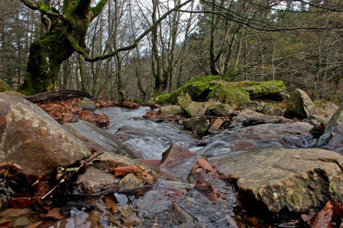 Cruce del arroyo existente.