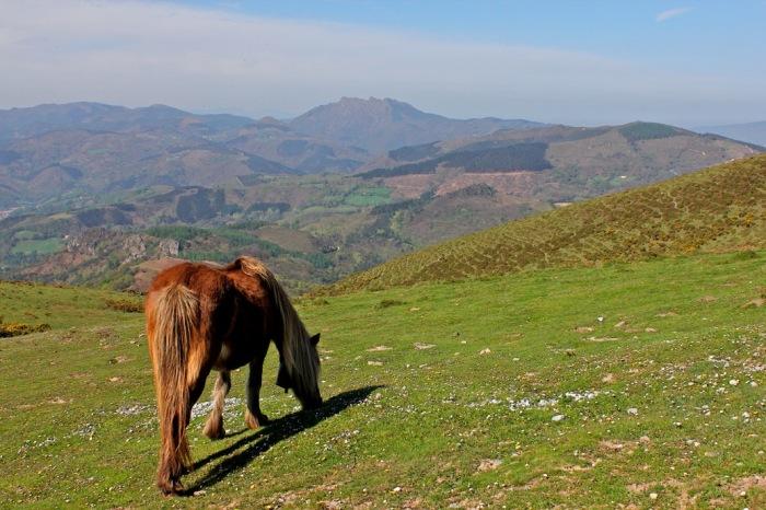 Caballos pastando en las laderas del La Rhune.